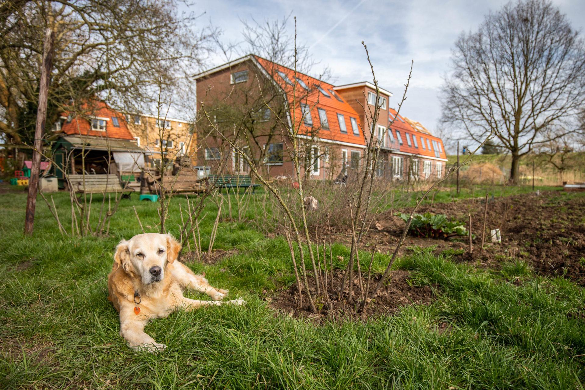 Foto: Jeroen van Heijningen (www.jeroenvanheijningen.nl)